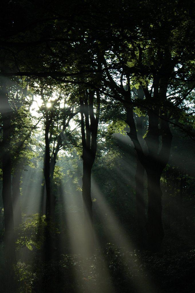 zonnepanelen plaatsen Aerdenhout